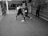 beim-sparring